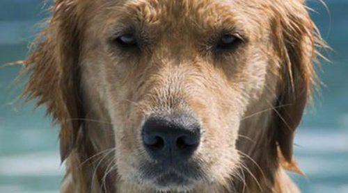 ¿Cómo puedes saber si tu perro tiene calor?