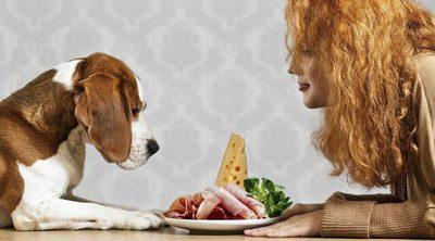 ¿Cuántas veces al día es aconsejable que coma un perro?