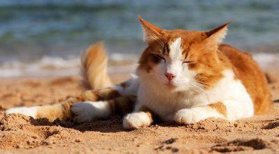 5 formas para hacer que tu gato sobrelleve mejor el calor