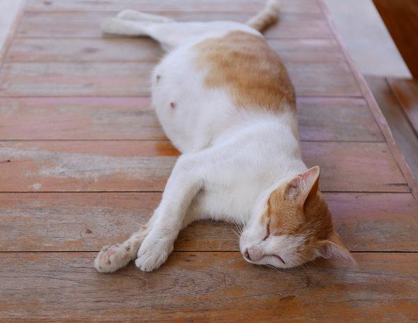 Cu nto dura el embarazo de una gata bekia mascotas for Cuanto dinero tiene un cajero