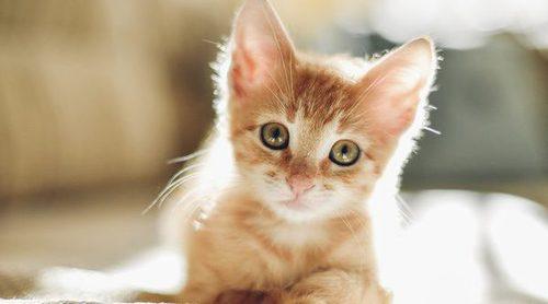 Consejos para elegir el nombre de tu gato