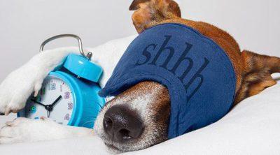 Consejos para elegir la cama correcta para tu perro