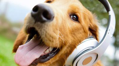 ¿Les gusta la música a los perros?