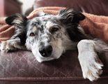 �C�mo puedo hacer que mi perro tenga menos gases?