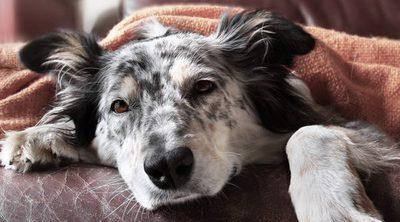 ¿Cómo puedo hacer que mi perro tenga menos gases?