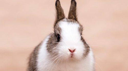 Cuidados para el pelo de un conejo