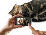 Trucos para conseguir que tu gato est� quieto al hacer una foto