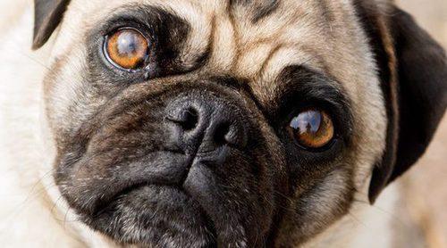 Trucos para conseguir que tu perro esté quieto al hacer una foto