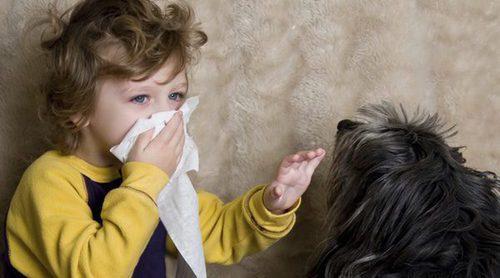 Síntomas de ser alérgico a los perros
