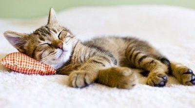 ¿Cuántas horas al día es aconsejable que duerma un gato?