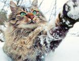 C�mo proteger a tu gato del fr�o