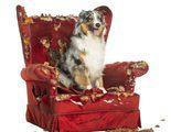 Consejos para hacer que tu perro se sienta m�s relajado