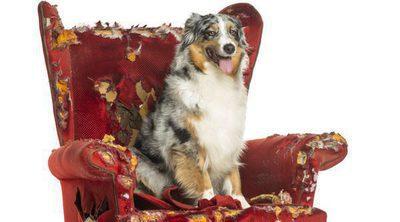Consejos para hacer que tu perro se sienta más relajado