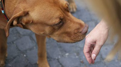 ¿Es aconsejable aplicar perfume a un perro?