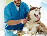 �C�mo puedo saber si mi perro est� enfermo?
