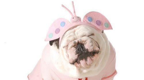 Disfraces para perros: ¿A favor o en contra?