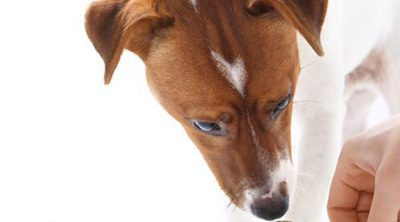 5 postres sanos y adecuados para perros