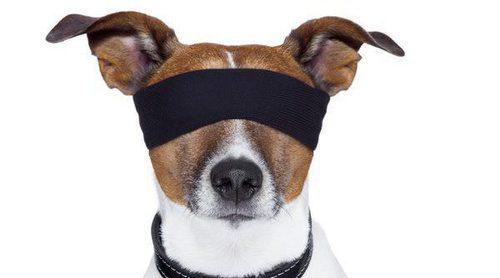 Cómo detectar si mi perro tiene problemas de visión