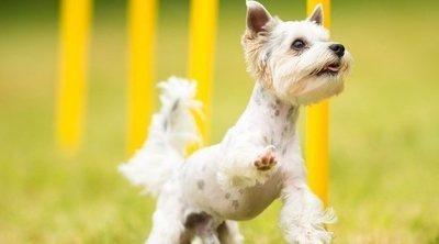 Las lesiones de cadera más comunes que un perro puede sufrir
