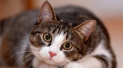 Prurito en los gatos: En qué consiste y cómo combatirlo