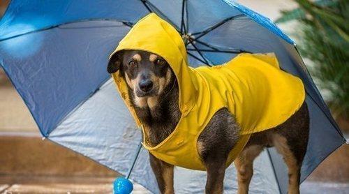 Consejos para limpiar a tu perro después de un paseo por la calle en un día de lluvia