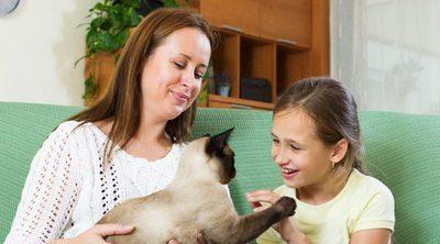 9 formas de jugar con tu gato en casa