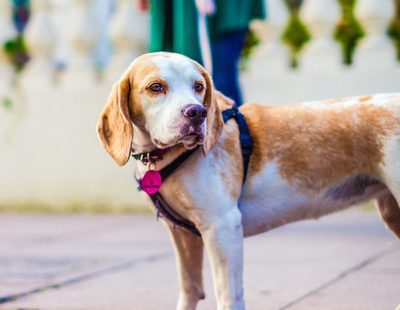 A mi perro no le gusta salir a pasear por la calle ¿A qué se puede deber?