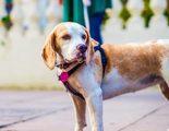 A mi perro no le gusta salir a pasear por la calle �A qu� se puede deber?