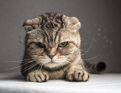 Señales que nos muestran que nuestro gato está envejeciendo
