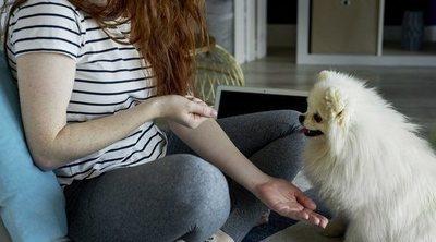 10 formas de jugar con tu perro en casa