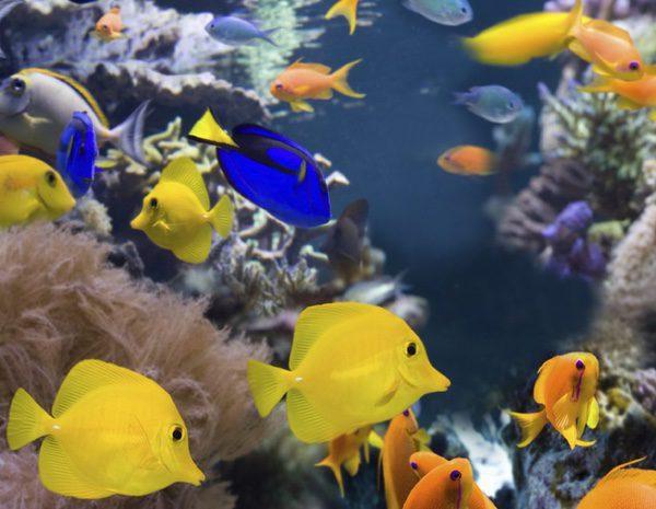 Los peces m s f ciles de cuidar agua dulce bekia mascotas for Peces de agua estancada