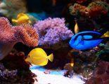 Los peces tropicales m�s f�ciles de cuidar