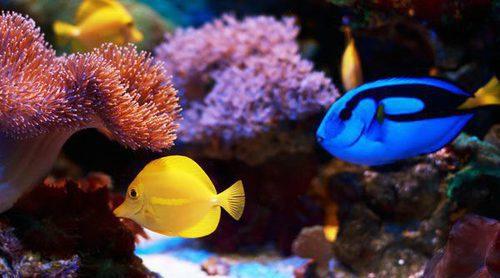 Los peces tropicales más fáciles de cuidar