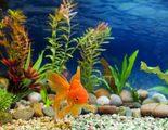 Limpieza del acuario: consejos b�sicos