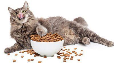¿Cómo puedo saber si mi gato tiene una alergia alimentaria?