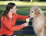 Receta de helado para perros