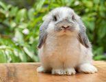 Conejos: descubre a estos roedores dom�sticos