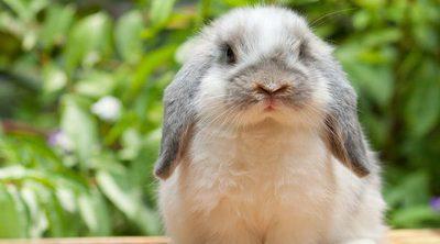 Conejos: descubre a estos roedores domésticos