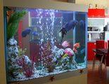 �Qu� productos necesito si acabo de comprarme un acuario?