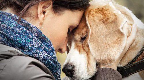 ¿Qué hago si tengo que sacrificar a mi perro?