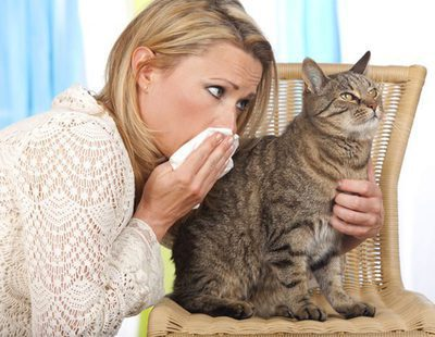 ¿Cómo convivo con mi gato si le tengo alergia?