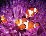 Un repaso por los peces del acuario de &quote;Buscando a Nemo&quote;