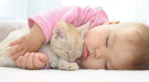 Gatos y bebés: ¿Es una buena combinación?