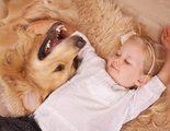 Ense�a a tus hijos a cuidar de su mascota a trav�s del juego