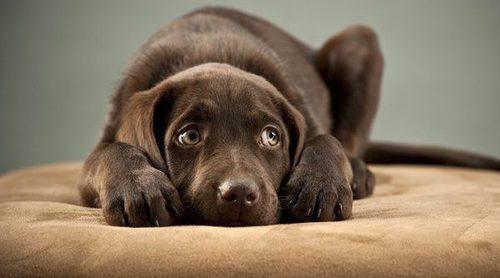Las fobias caninas: los peculiares miedos de tu perro