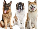Los perros de cine que m�s nos han marcado