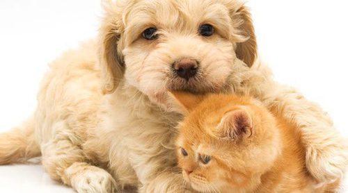 ¿Perro o gato, qué es mejor como mascota?