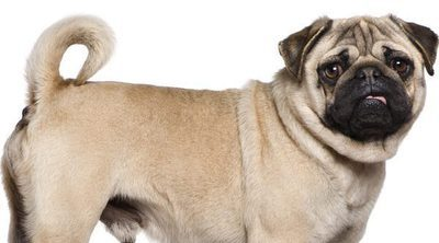 ¿Qué es el pedigrí?