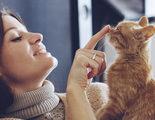 �De qu� colores pueden los gatos tener los ojos?