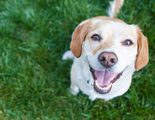 �C�mo evitar que te roben a tu perro en el parque?